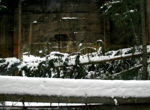Dagmar viste liten respekt, hverken for døde eller levende. Veltede trær foran stridsvognskytebanen på Trandum